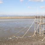 有明海の四手網