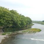 中の島公園楠林