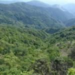 矢部村源流のブナ林